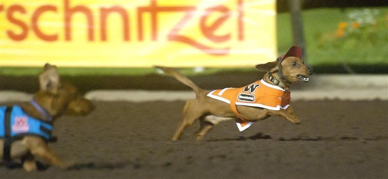 Los Alamitos Race Course